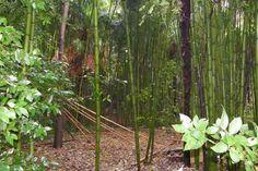 Der Bambuswald in Abbazia Plants, Rain, Simple, Nice Asses, Plant, Planets
