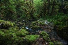 stages phot Pyrenees Naturavista montagne