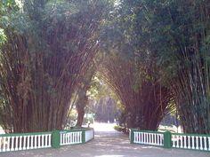 Parque das Águas de São Lourenço em São Lourenço, MG