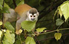 Volunteer with Kids Saving the Rainforest