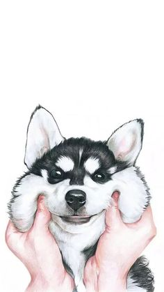 Dog, wallpaper, and husky image Dog Wallpaper Iphone, Cute Wallpaper For Phone, Animal Wallpaper, Colorful Wallpaper, Galaxy Wallpaper, Disney Wallpaper, Wallpaper Backgrounds, Baby Animals, Animaux