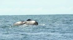 Whale Watching Season, Blue Whale, Luxury Apartments, Whales, Under The Sea, The Good Place, December, Southern, Journey