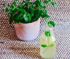 at ease: Honey Ginger Lemonade Ginger Lemonade, Winter Time, Smoothies, Planter Pots, Honey, Plants, How To Make, Smoothie, Plant