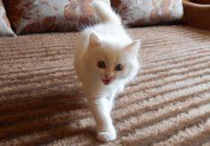 смешной кот.смешные видео про котов. ржач до слёз.