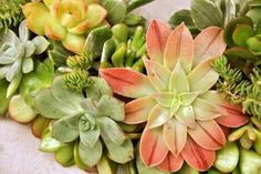Yellow succulentsg 750422 flowering cactus succlents flower duet can teach you how to design with succulents and flowers mightylinksfo