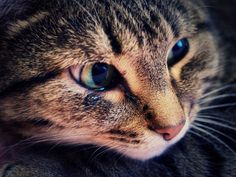 Home Remedies for Cat Colds