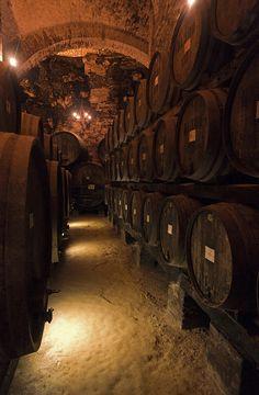 Wine caskets in a cellar in Montepulciano, Italy. photo by Dolf van der Haven