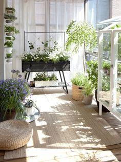 Mustan Kekkilän Jalallisen viljelylaatikon avulla perustat helposti pienen puutarhan kotisi parvekkeelle tai terassille. Helposti koottavassa kokonaisuudessa on kaikki mitä tarvitset keittiöpuutarhan tai pienen kukkaloiston loihtimiseen: jalallinen viljelylaatikko, köynnöstuki, tarvikehylly ja kolme viljelytikkua. Jalallinen viljelylaatikko on turvallinen valinta syötävien kasvien viljelyyn. Lisää vain säkillinen ruukkusoraa ja puolitoista säkillistä puutarhamultaa. Vyötärön tasolle…