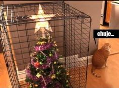 Make Christmas a pet-safe holiday with a well-thought-out Christmas tree, simple ornaments and accessories, and carefully selected food and cocktails. Xmas Tree, Christmas Tree Decorations, Annoyed Cat, Tier Fotos, Christmas Cats, Christmas Trees, Christmas Tree Cat Proof, Funny Christmas, Pet Safe