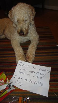 Dog Shaming - pantry raider