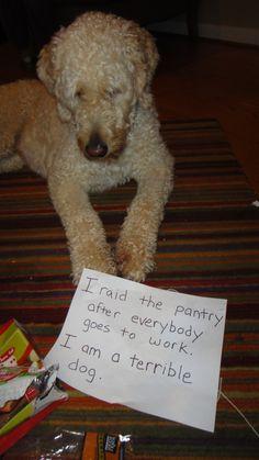 Dog Shaming - pantry raider