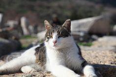 bu kedi sıradan bir kedi değil sıradan olmayışının tek tek sebebi varlığını ve asilliğini yitirmemiş olması miyawwwwww
