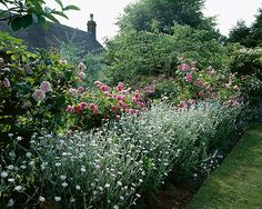 Roses 'ispahan' and 'constance spry' and lychnis coronaria oculata. Ashtree cottage, wiltshire. Designer: W lauderdale www.clivenichols.com