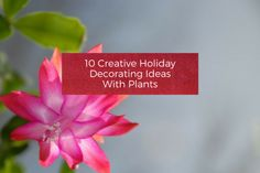 10 Creative Holiday Decorating Ideas With Plants
