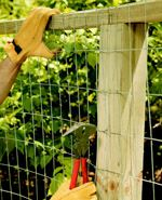 i just need a fence to seperate the dogs and chickens and that can grow vines...