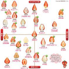 Twitterで話題!あの桃の家系図はこうして誕生しました…と中の人が語る裏話満載。桃の断面図ほか、苺の断面図やみかんの断面図も登場します。断面図カタログ、ばんざーい!\(^o^)/