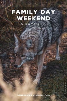 Visit Kamloops during the Family Day long weekend from February From events to outdoor exploration, there is plenty of fun to be had with the family. Family Day Weekend, Long Weekend, Wildlife Park, Birds Of Prey, Whistler, Family Activities, Elk, February, Times