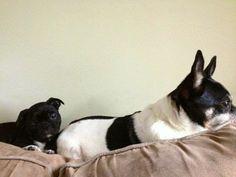 Tico&Charlie girl