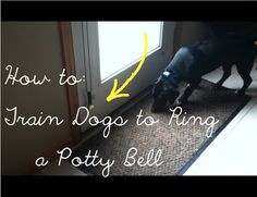 How to: Train Dogs to Ring a Potty Bell. This way they won't scratch up the door or bark at you, and you can hear it from almost anywhere in the house! It only takes a week to learn!