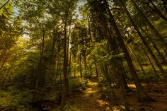 Temperate Deciduous Forest, Biomes, Conservation, Plants, Trees, Plant, Home Decor Trees, Wood, Planting