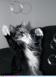 Norwegian Forest Cat Ragdoll Cat 최고 인기 이미지 77개 고양이 동물 및 귀여운 동물 사진