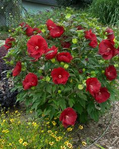 1000 ideas about low maintenance plants on pinterest for Easy maintenance perennials