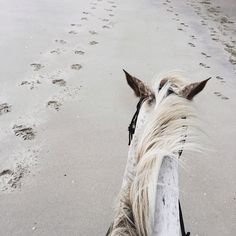 quiet..a beach and a horse...