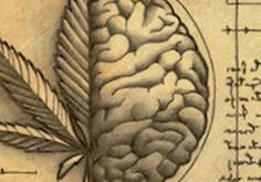 [em]In this second of the two-part feature, Cannabis Health contributor Stuart Tomc leads us in understanding the role Cannabidiol (CBD) plays influencing… Medical Benefits Of Cannabis, Medical Marijuana, Effects Of Chemotherapy, Endocannabinoid System, Peripheral Neuropathy, Cbd Hemp Oil, Clinical Research, Cancer Treatment, American Traditional