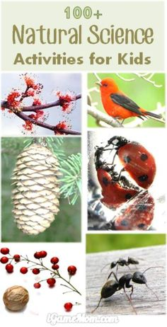 More than 100 natural science activities for kids from preschool to high school: water, ice, weather, seed, flower, pine cone, … wonderful STEM resource to keep kids busy all year long. All are simple science experiments, for your science study in the cla
