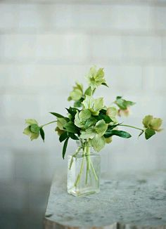 Gorgeous greens from Hellebore