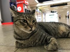 Shot on iPhone 7: The cat in Bukit Gombak MRT station