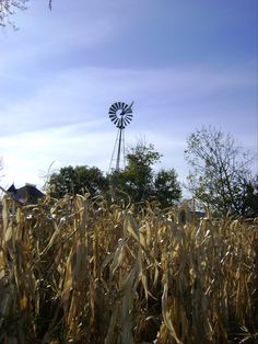 corn field, see a lot of these where I come from...