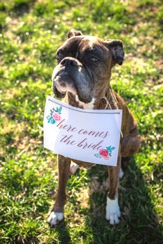 Dog Ring Bearer Sign by Fleetwood Photo & Digital - Lindsey Worthington | The Pink Bride®️ www.thepinkbride.com