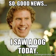 So, good news...I saw a dog today.  Great Elf quote.