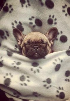 Snug as a bug in a rug!