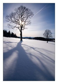 °° Dans L'ombre..., La Chaux-de-Fonds, Switzerland Copyright: Raphael Richardet Europe, Snow And Ice, Winter Time, Beautiful Places, Copyright, In This Moment, World, Beach, Countries