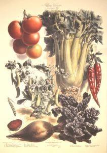 The Vegetable Garden by Vilmorin