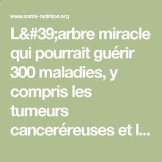 L#39;arbre miracle qui pourrait guérir 300 maladies, y compris les tumeurs canceréreuses et le diabète - Santé Nutrition