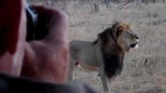 This was Cecil. Change the laws, end the senseless killing!! #JusticeForCecil - Cecil - Africa's Biggest Lion