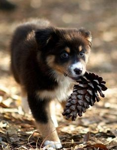 Pine cone and puppy!   PINECONEJUNKIE.COM LOVES THIS!