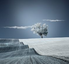 Warm blanket of nature by Caras Ionut, via 500px