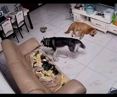 Funny Animal Memes, Funny Animal Videos, Funny Animal Pictures, Cute Funny Animals, Cute Baby Animals, Funny Dogs, Animals And Pets, I Love Dogs, Animals Beautiful