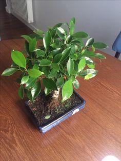 Arredare casa con un bonsai
