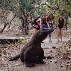 In Search of Dragons: What to expect when visiting Komodo National Park
