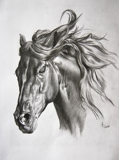 Healthy breakfast ideas for kids age 9 to make 3 12 11 Horse Head Drawing, Horse Pencil Drawing, Pencil Drawings Of Animals, Horse Drawings, Animal Sketches, Art Sketches, Art Drawings, Painted Horses, Horse Sketch