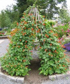 Incomparable Vegetable Gardening Tips At Your Backyard Ideas. Impressive Vegetable Gardening Tips At Your Backyard Ideas. Veg Garden, Edible Garden, Garden Art, Garden Trellis, Vegetable Gardening, Bean Trellis, Vegetable Design, Potager Garden, Veggie Gardens