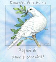 Scisciano Notizie - La Redazione, Buona Domenica delle Palme: Pace e serenità a tutti voi