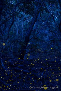 Firefly via Once in a lifetime Blue Bayou, My Fantasy World, Once Upon A Time, Shades Of Blue, City Photo, Leaves, Art Prints, Fireflies, Romantic