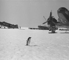 Things looked bleak but penguin had it all under control.