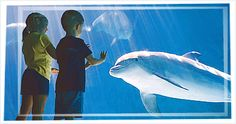 Sea World.org is a great resource to teach about sea creatures!